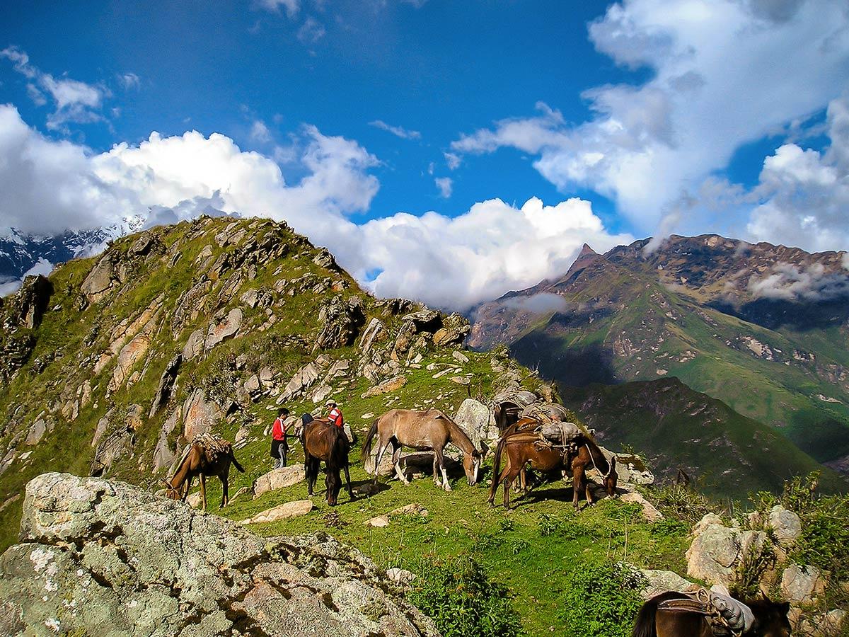Horses resting on Choquequirao Trek in Peru near Cusco