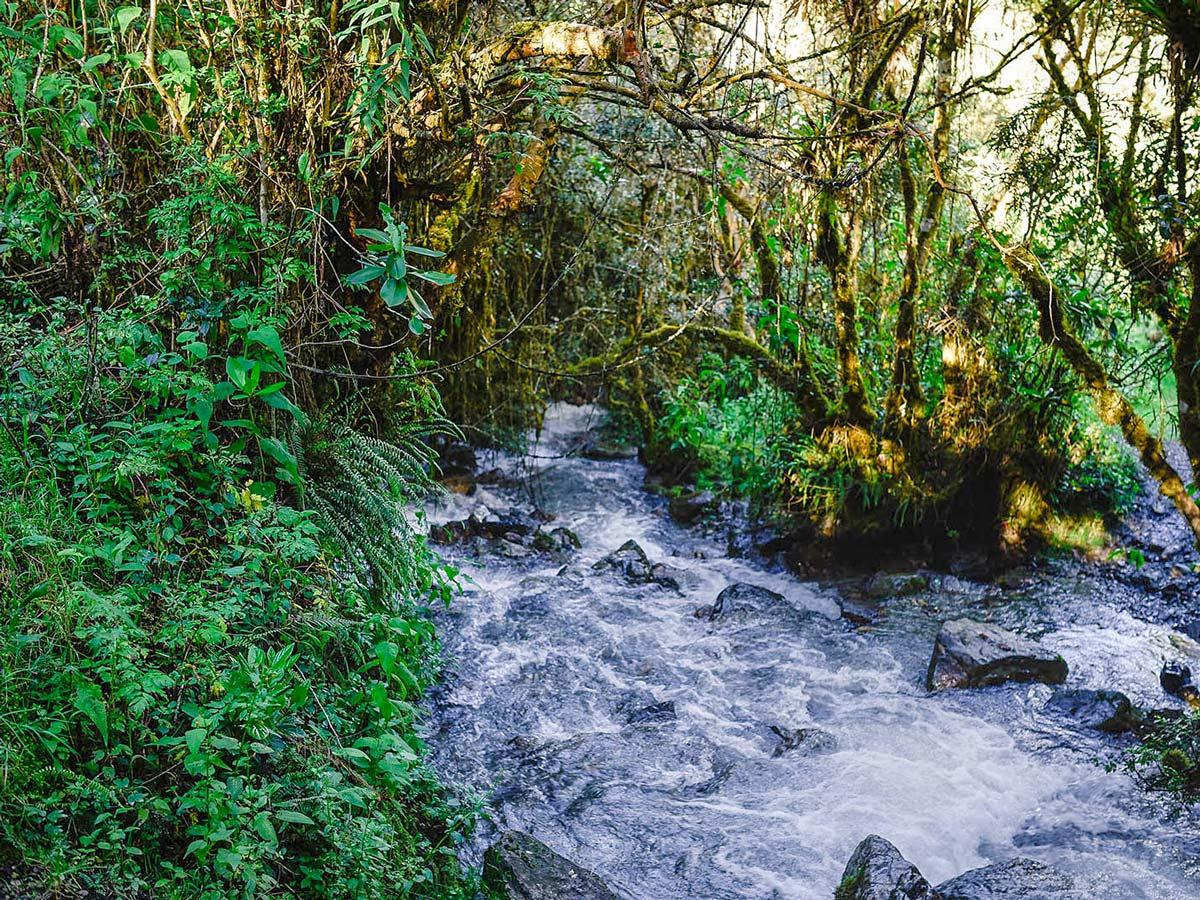 Creek on Inca Trail to Machu Picchu near Cusco Peru