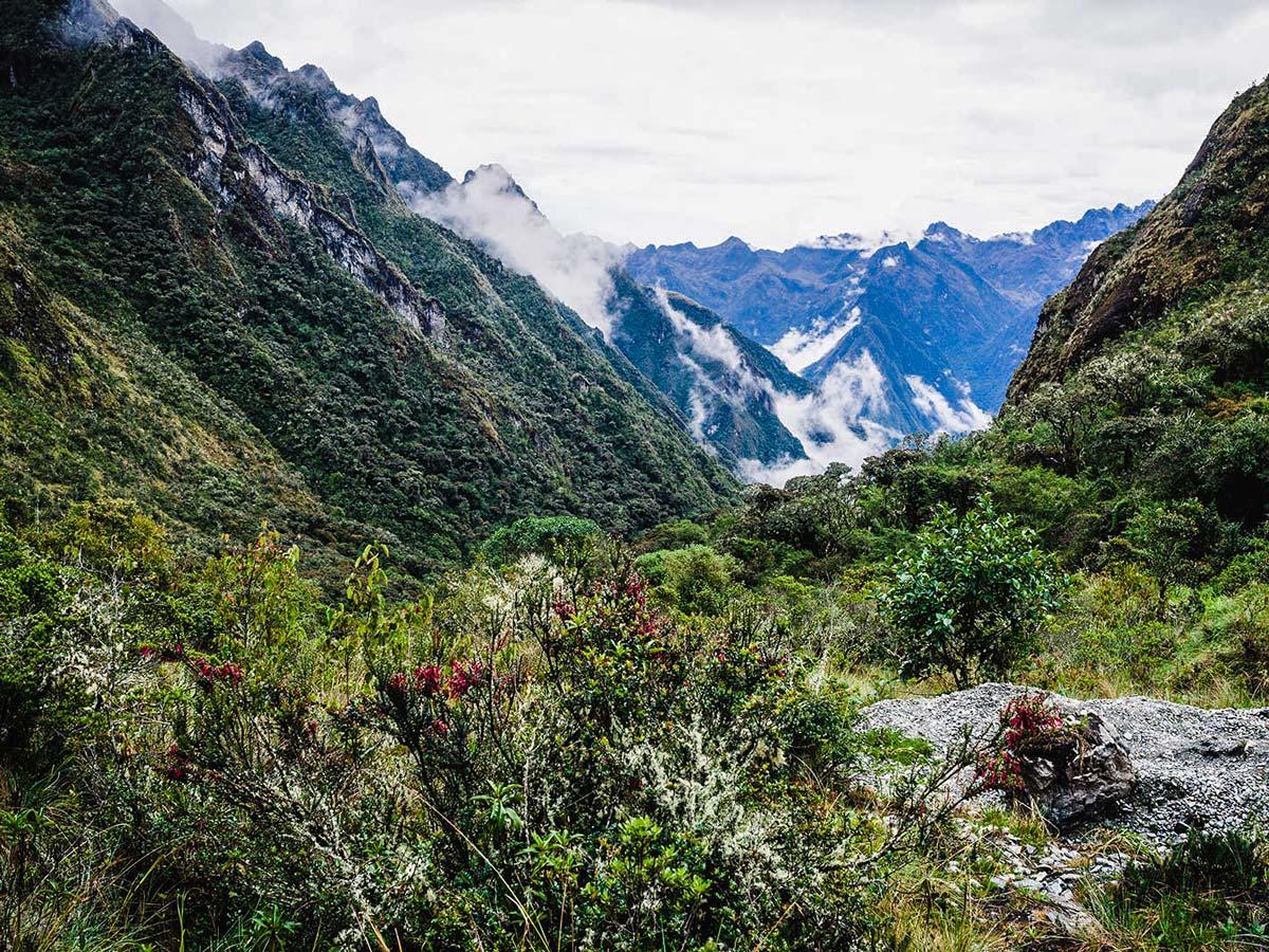 Beautiful flora along Inca Trail to Machu Picchu near Cusco Peru