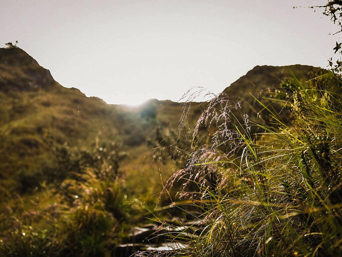 Flora along Inca Trail to Machu Picchu near Cusco Peru