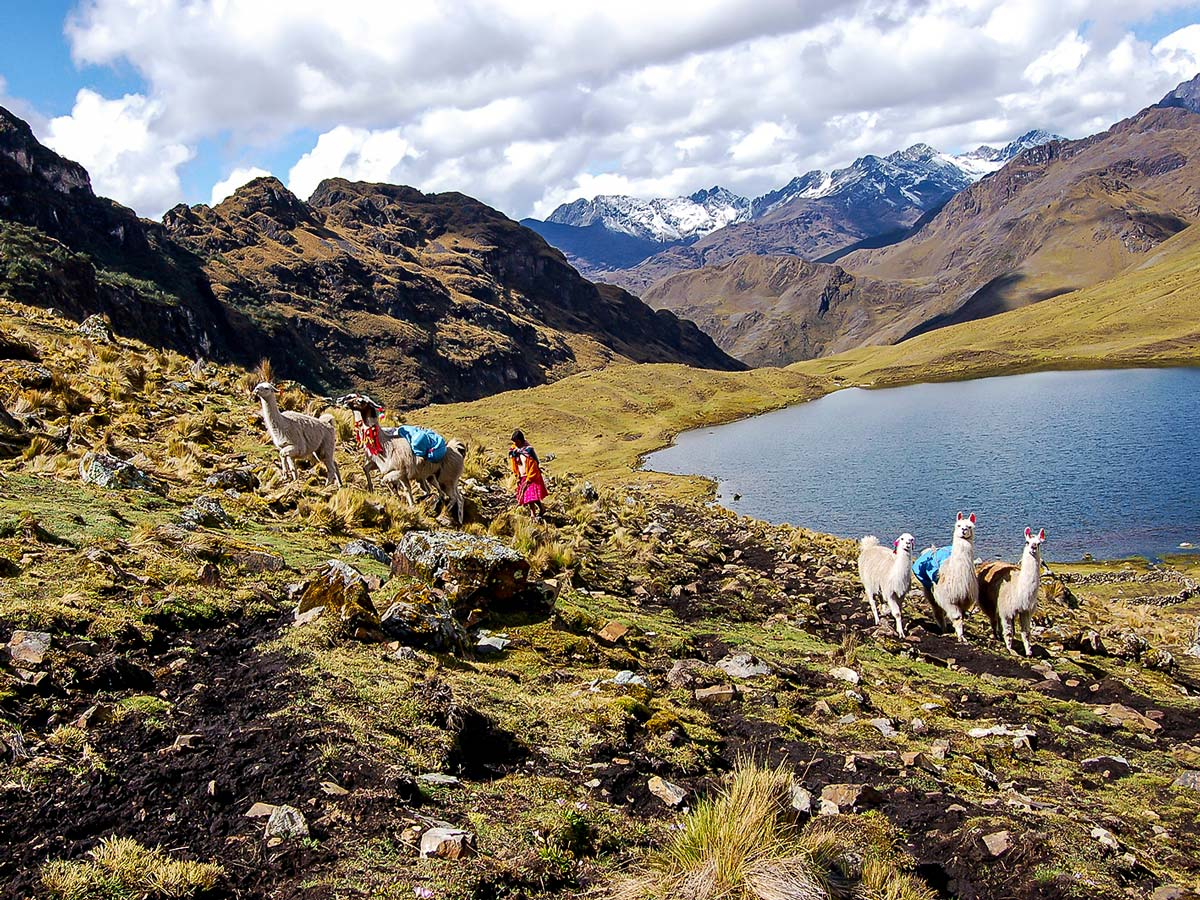 Llamas and local people on Lares Trek to Machu Picchu near Cusco Peru