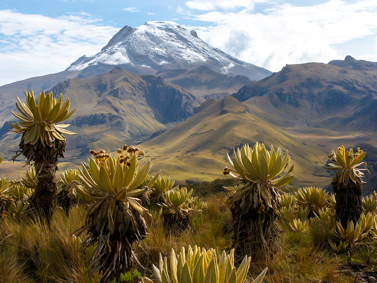 Los Nevados National Park in Columbia is a wonderful place to visit for trekking lovers and can be explored on Los Nevados Trek in Colombia