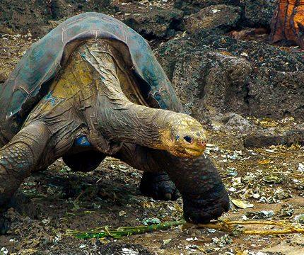 Ecuador: Amazonas to Galapagos