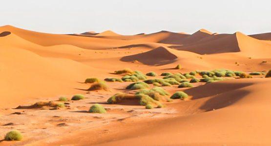 Erg Chigaga Sahara Camel Trek