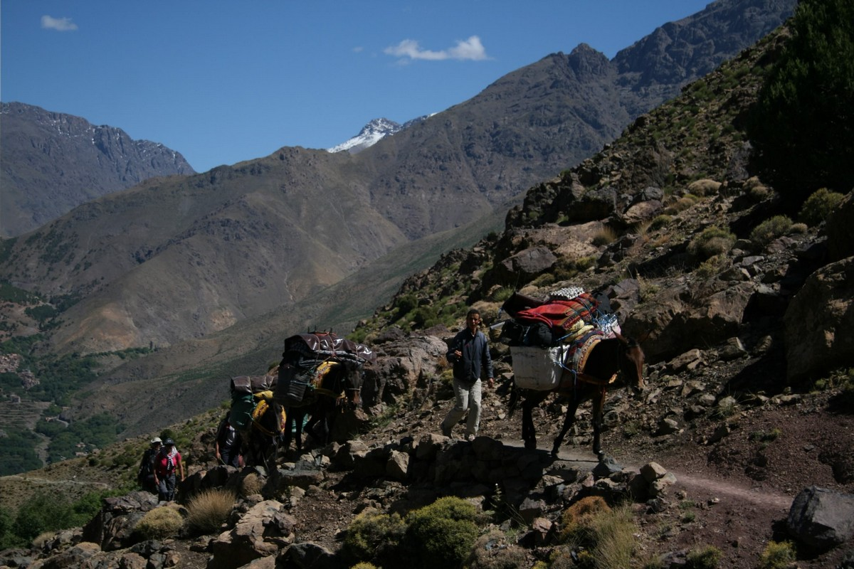 Donkeys carrying trekking necesities on guided trekking tour to Atlas Valley from Marrakech Morocco