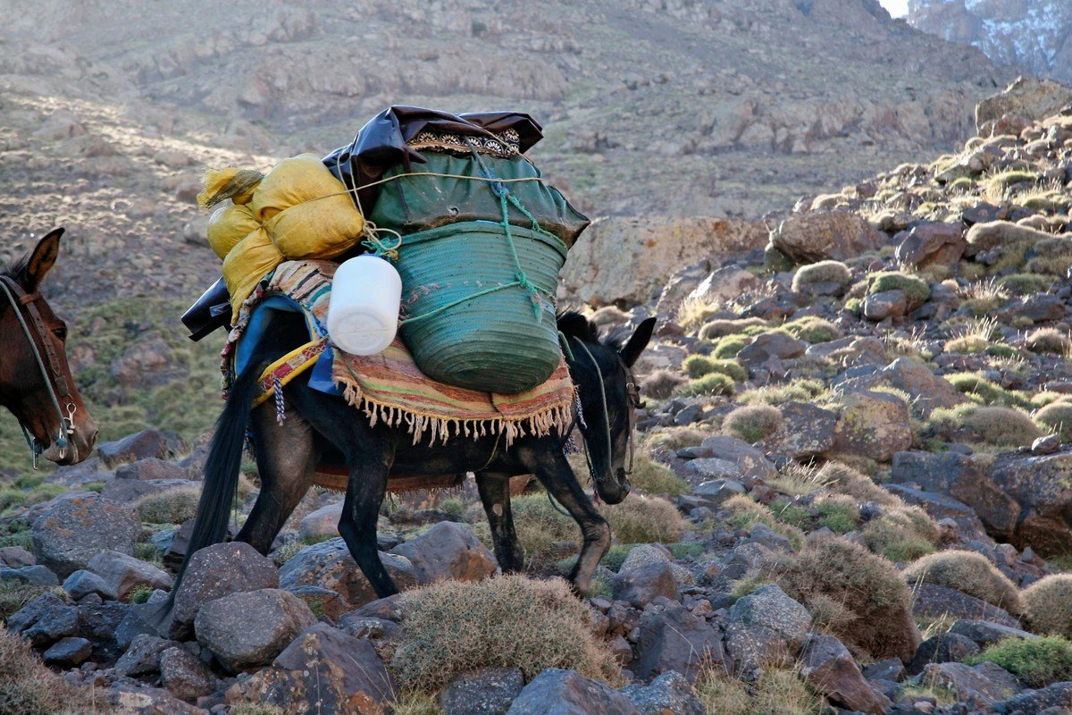 Donkey with a big load on guided trekking tour to Atlas Valley from Marrakech