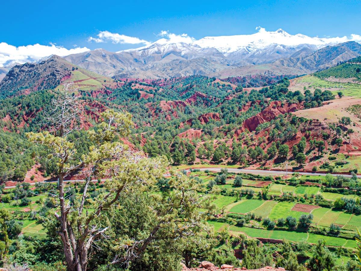 Green terraces seen on Mt Toubkal Circuit Trek in Morocco