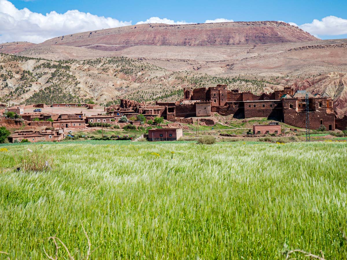 Green meadows along the trail of Merzouga Overland Tour from Marrakech