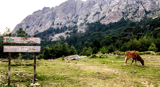 Coast to Coast Across Corsica
