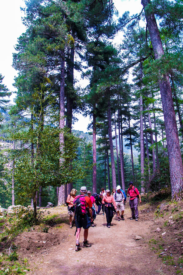 Hiking through the pine forest in Evisa on Scala to Piana trek in Corsica Island