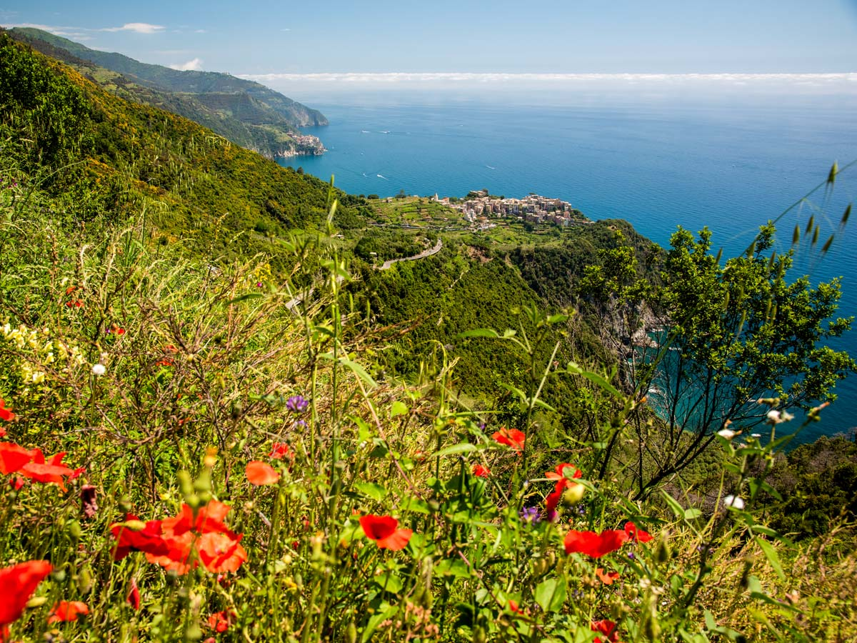 Wildflowers along the trail of self guided Sestri Levante to Porto Venere trek in Cinque Terre Italy