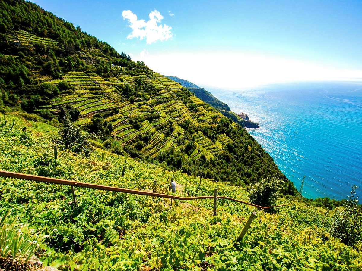 Green fields on Sestri Levante to Porto Venere trek in Cinque Terre Italy