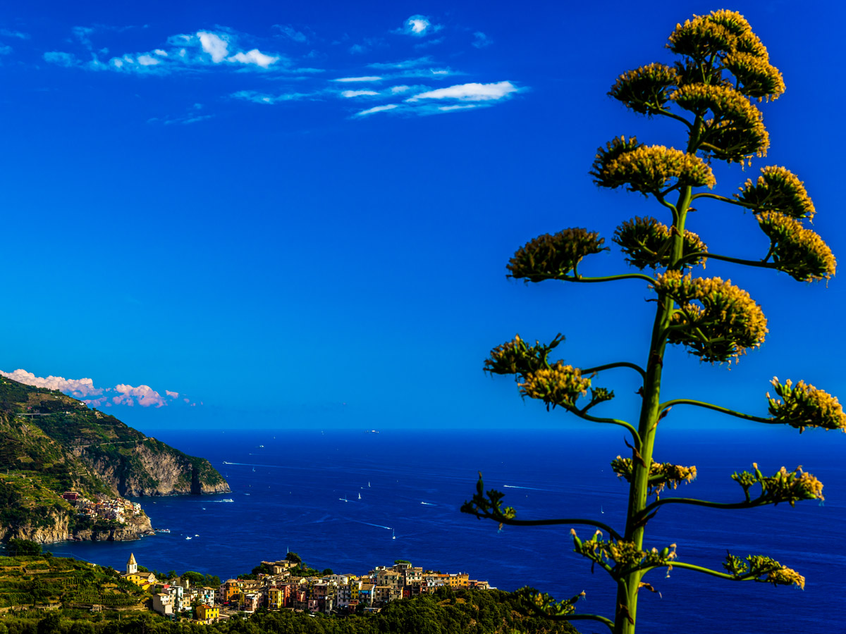 Blue sky above the Mediterranean Sea on Sestri Levante to Porto Venere trek in Cinque Terre