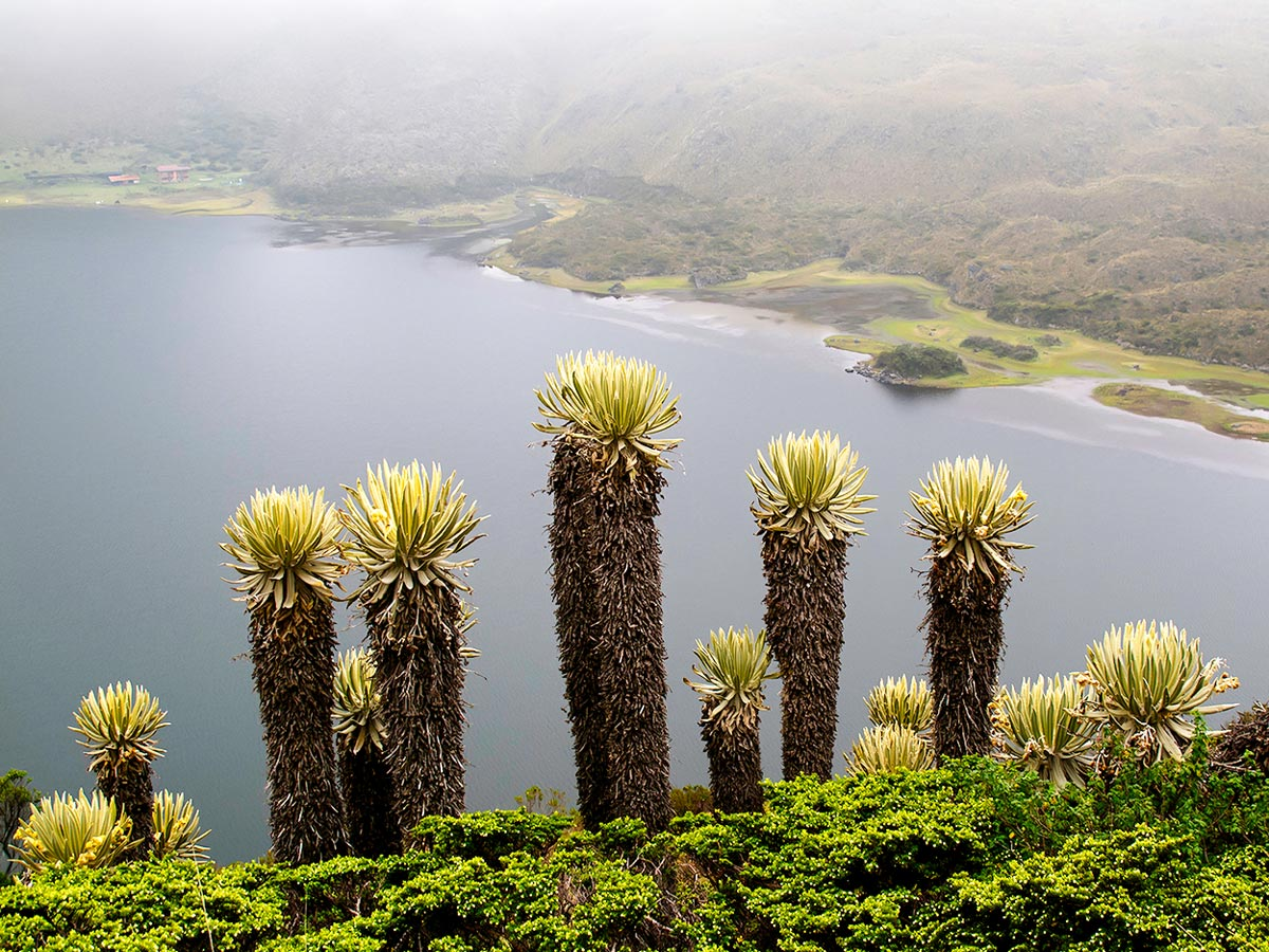 Walking in Colombia Tour is an amazing adventure including the highlights of Colombia