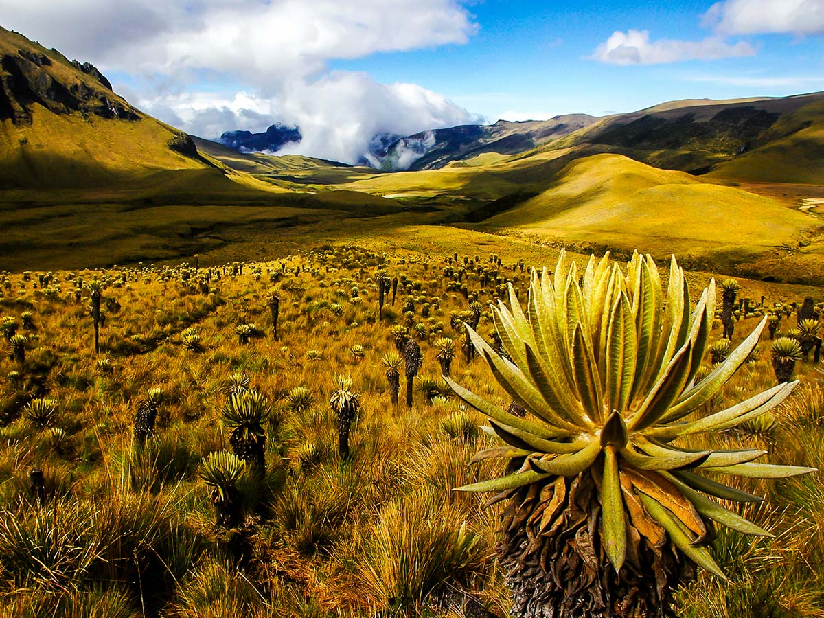 Colombia is a wonderful country for trekking lovers and can be explored on Colombia Off Road Tour