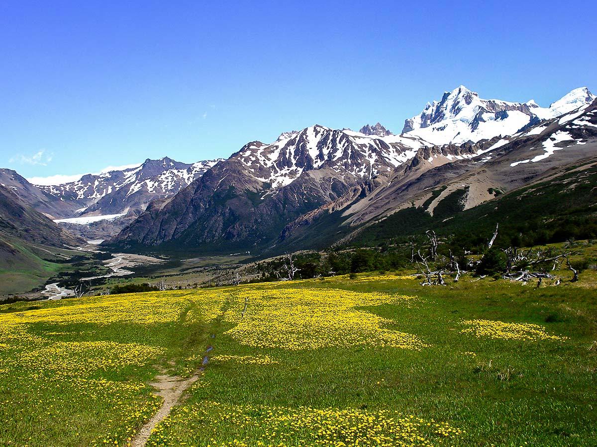 Green meadows covered by wildflowers seen on Patagonias Icefield Trek