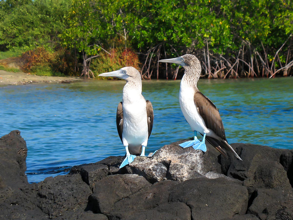 South American wildlife can be spotted on Peru Ecuador Galapagos Tour