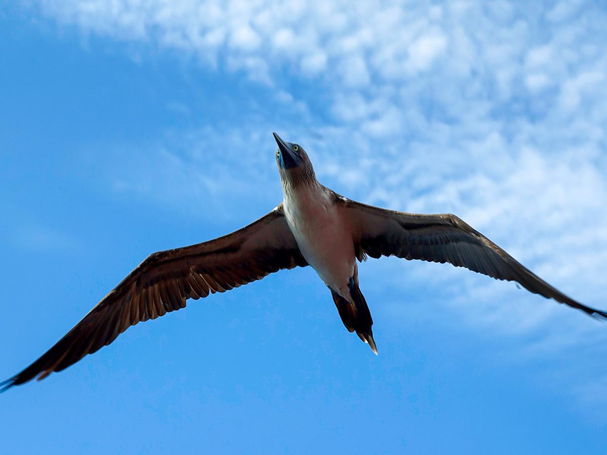 Peru Ecuador Galapagos Tour is a treat for wildlife lovers