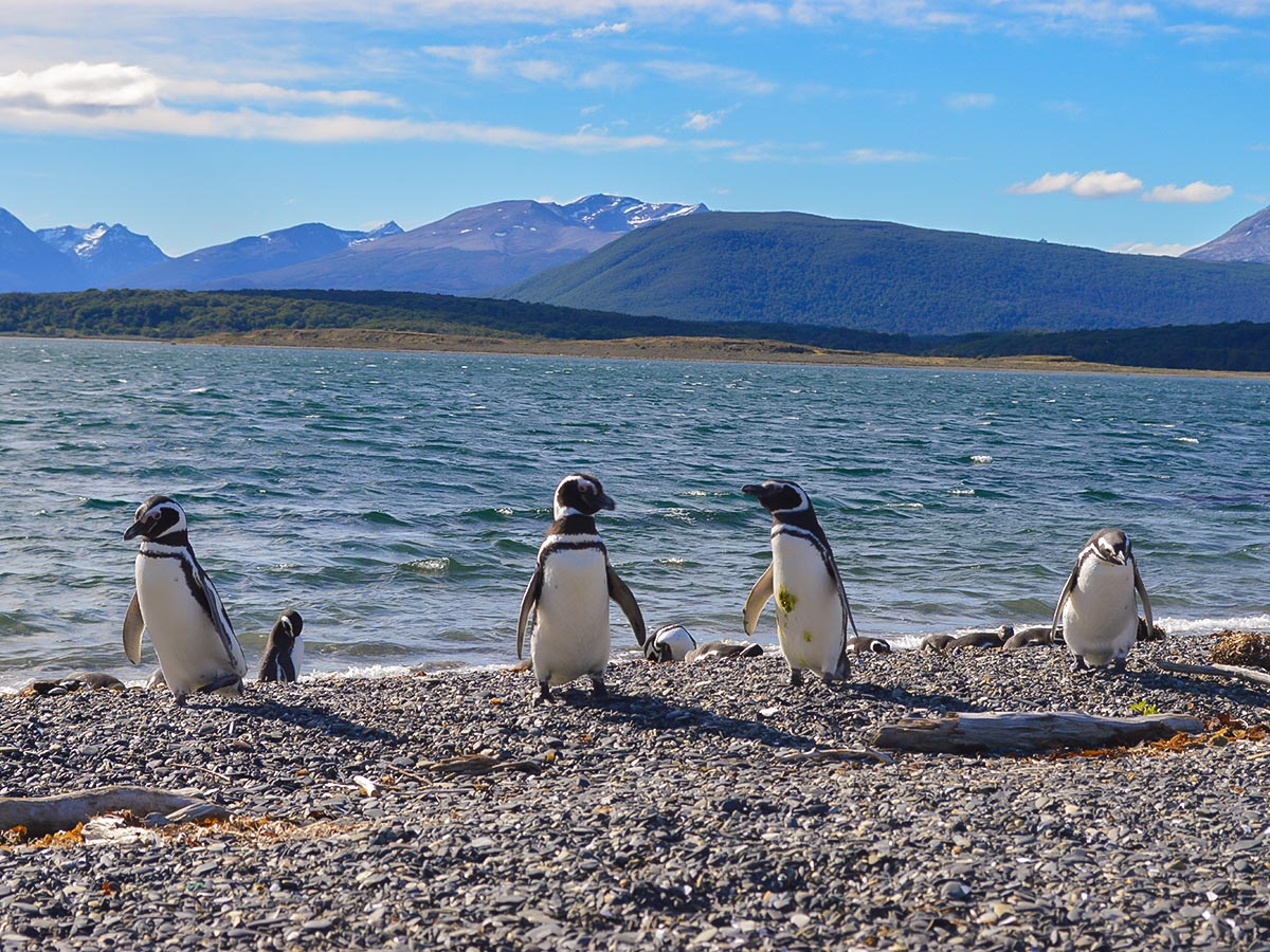 Penguins met on optional tour to Harberton on Guided Full Patagonia Adventure Tour with group