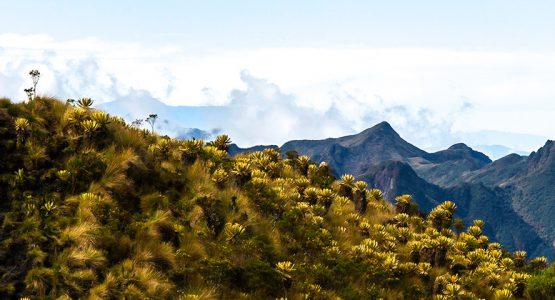 Los Nevados, Tayrona Beaches and the Lost City