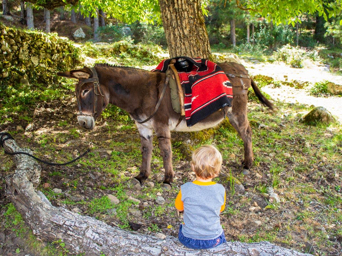 Donkey Trekking Tour an amazing family friendly tour in Corsica