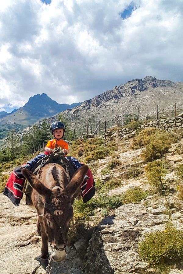 Donkey Trekking Tour in Niolo Region in Corsica is an amazing family friendly tour