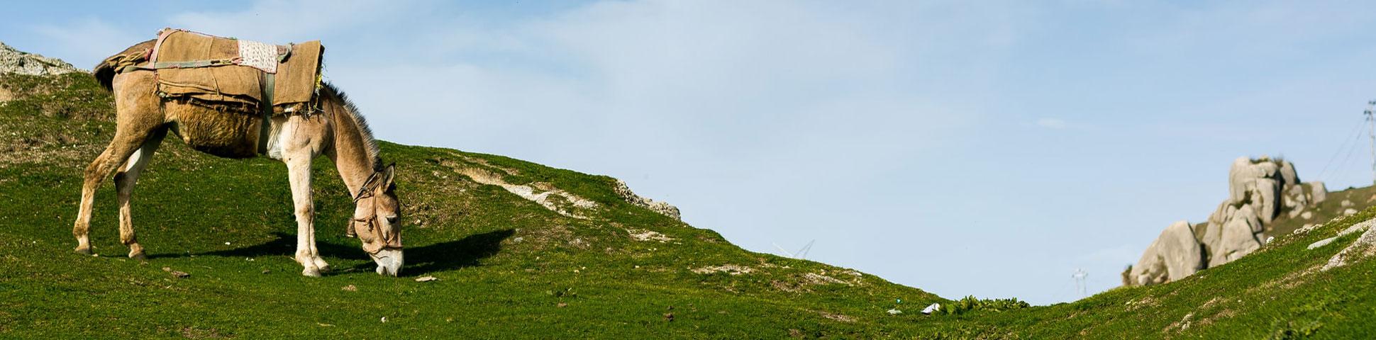 Corsica Family Donkey Trek