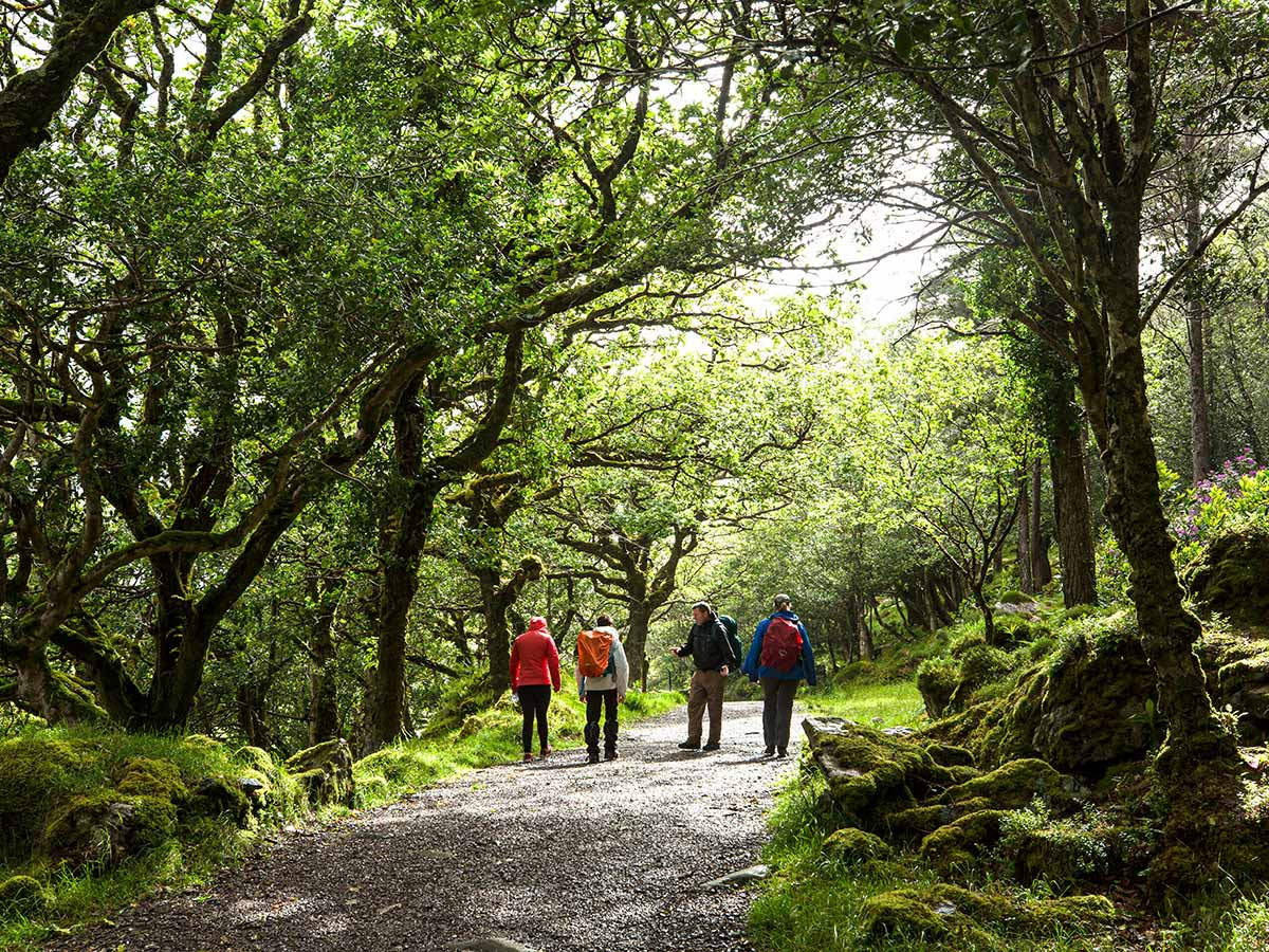 Wild trail of Deluxe Hiking Kerry Mountains tour in Ireland