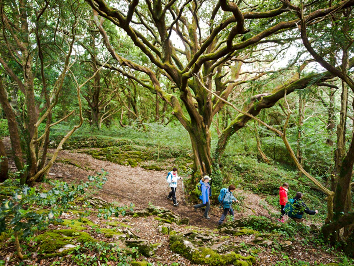 Crossing the Killarney forest on Deluxe Hiking Kerry Mountains tour