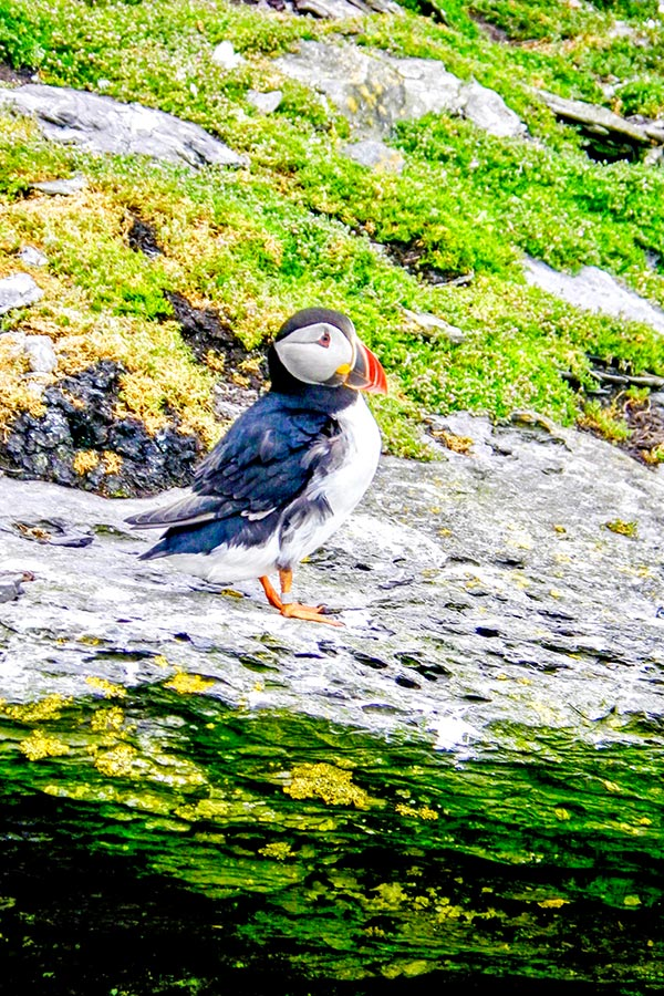 Puffin met on Family Adventure Giants Myths Legends Tour in Ireland