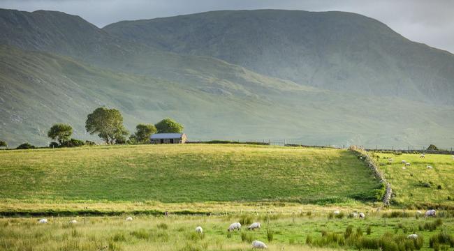 Hiking & Island Hopping - Ireland's West Coast