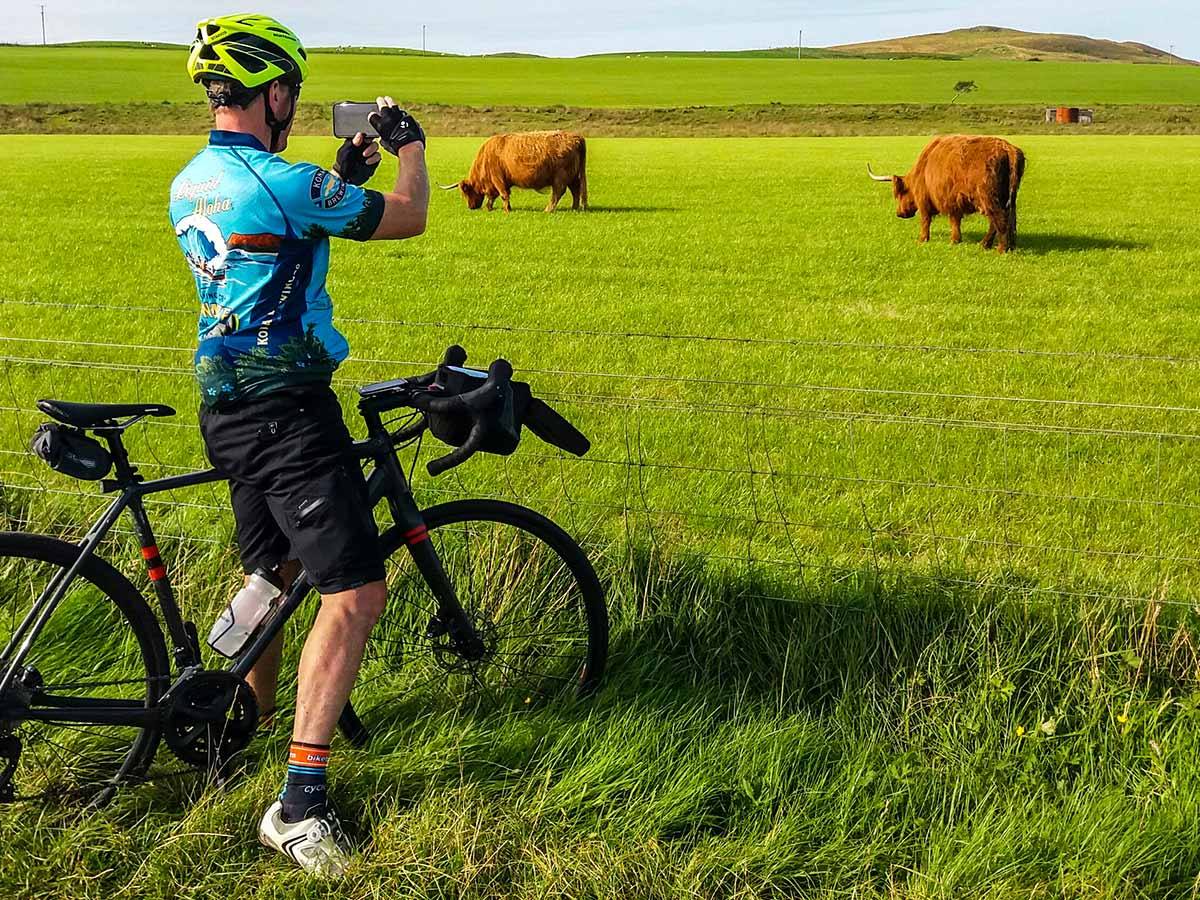 Looking at highland cattle on Arran Islay and Jura Road Biking Tour