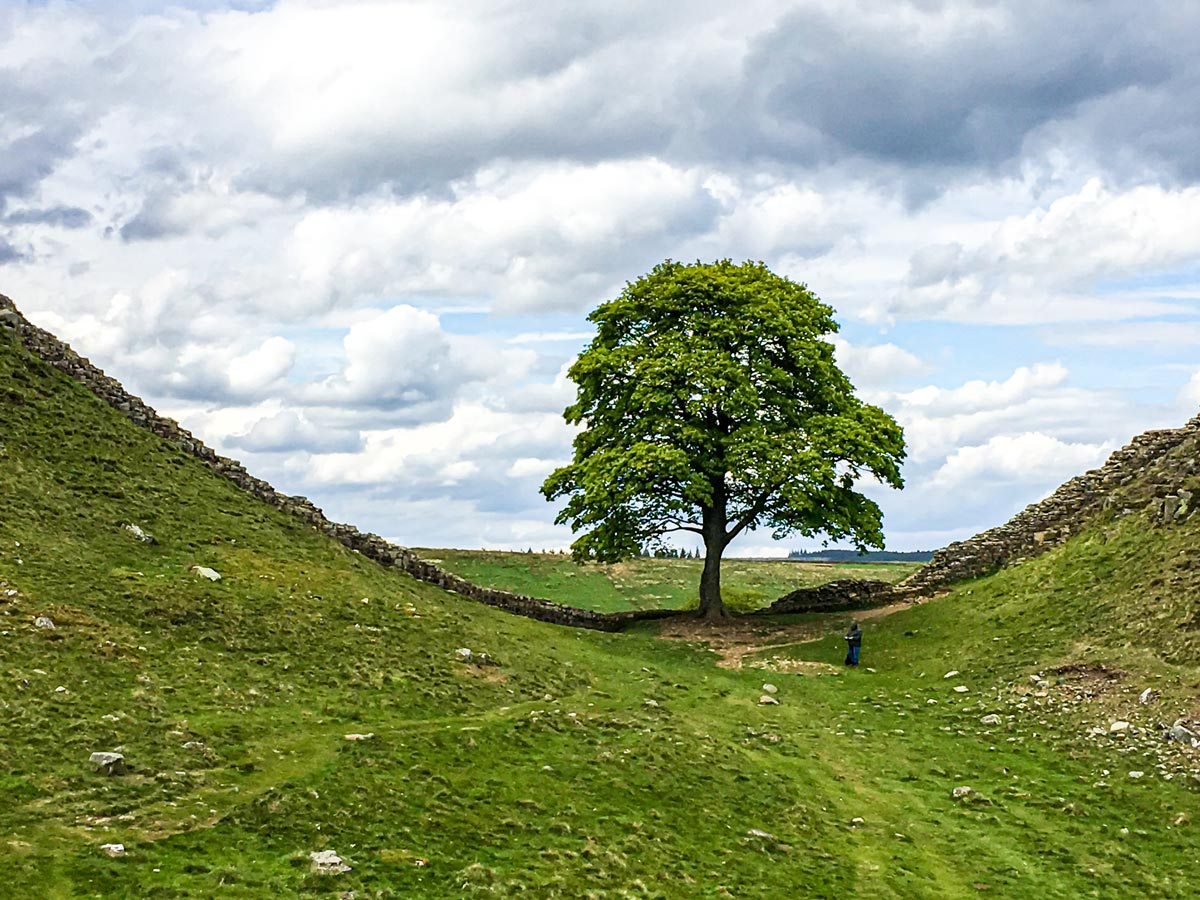 Lonely tree met on National Parks of the UK Guided Walking Tour in England