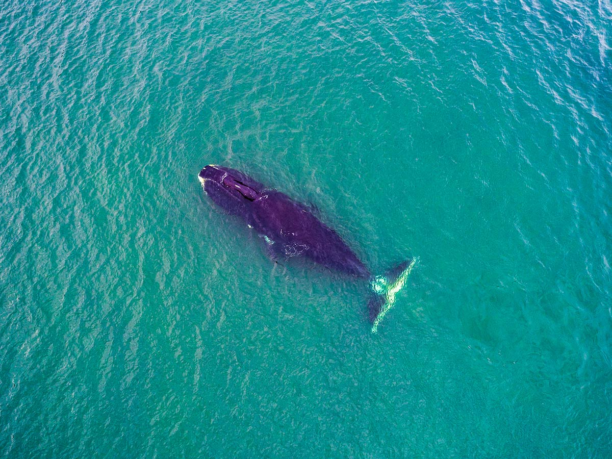 Lone whale met on Expedition to Shantar Islands Tour in Russia
