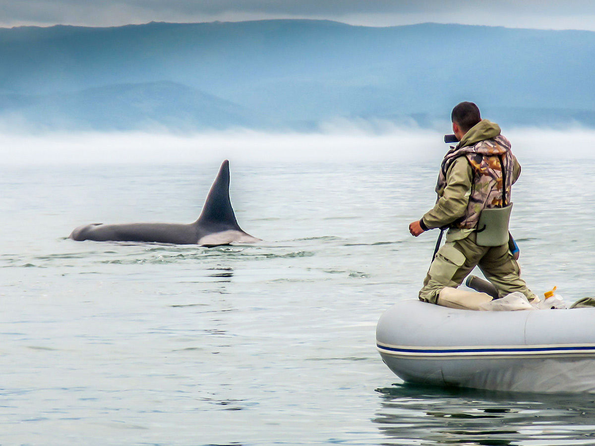 Watching a killer whale on Expedition to Shantar Islands Tour in Russia