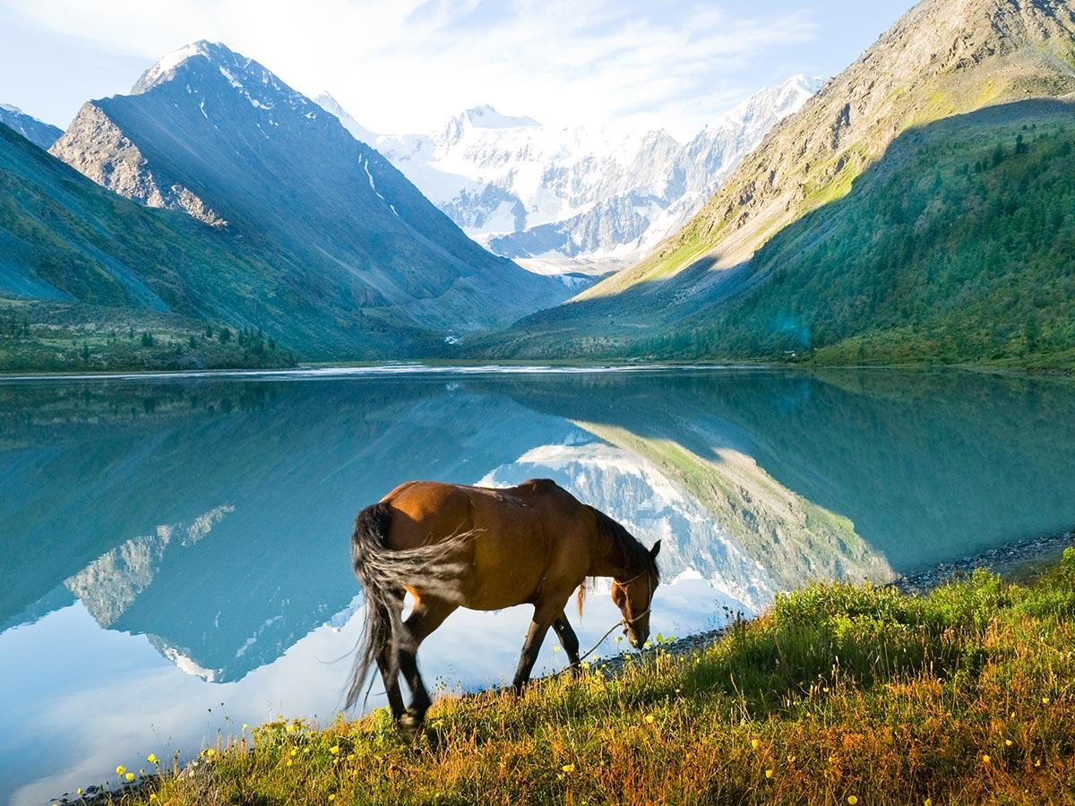 Brown horse near lake Kucherla in Altai Mountains