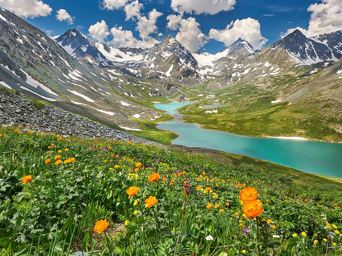 Orange wildflowers near the turqoise lake surrounded by the mountains