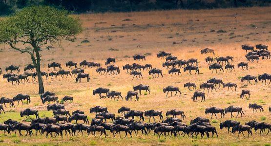 East Africa Camps Classic Safari