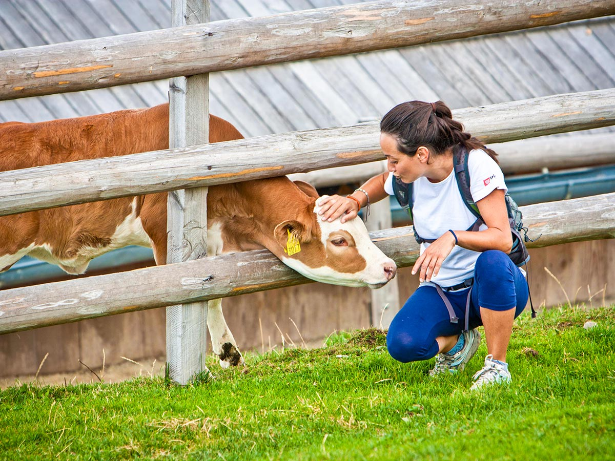 Petting a cow in Velika Planina Best Walks in Slovenia Tour
