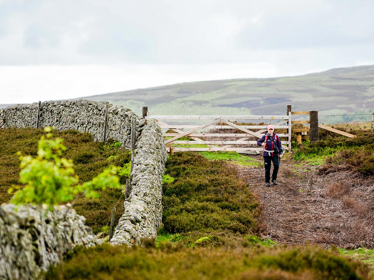 Walking along the pastures of England on Northumberland and the Lake District guided walking tour