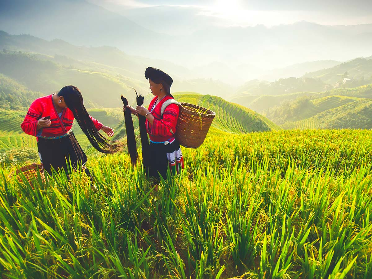 During the Wild China Tour you will have a chance to see the beautiful fields of Longji