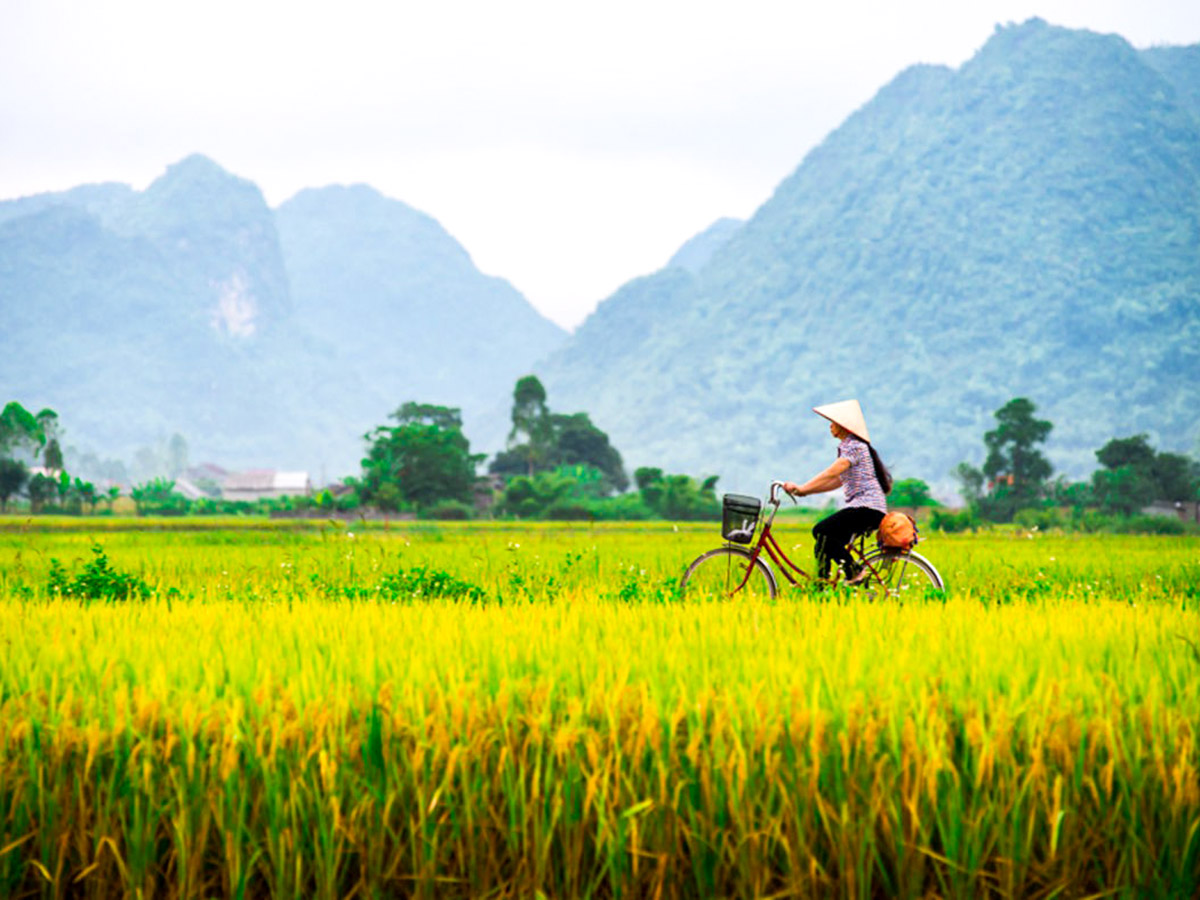 Ricefields along the trail of Cycling up north to Laos Tour in Vietnam