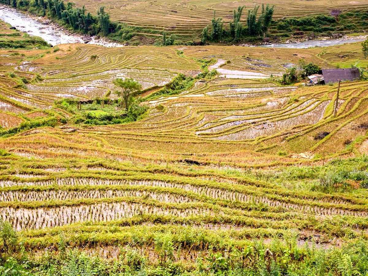 Farming terraces seen on th day of North Vietnam Mountain Trek
