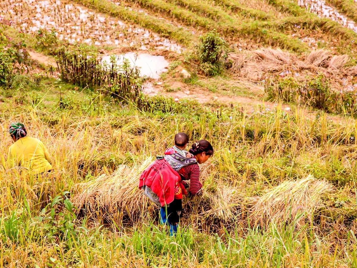 North Vietnam Mountain Trek includes trekking along the farmlands