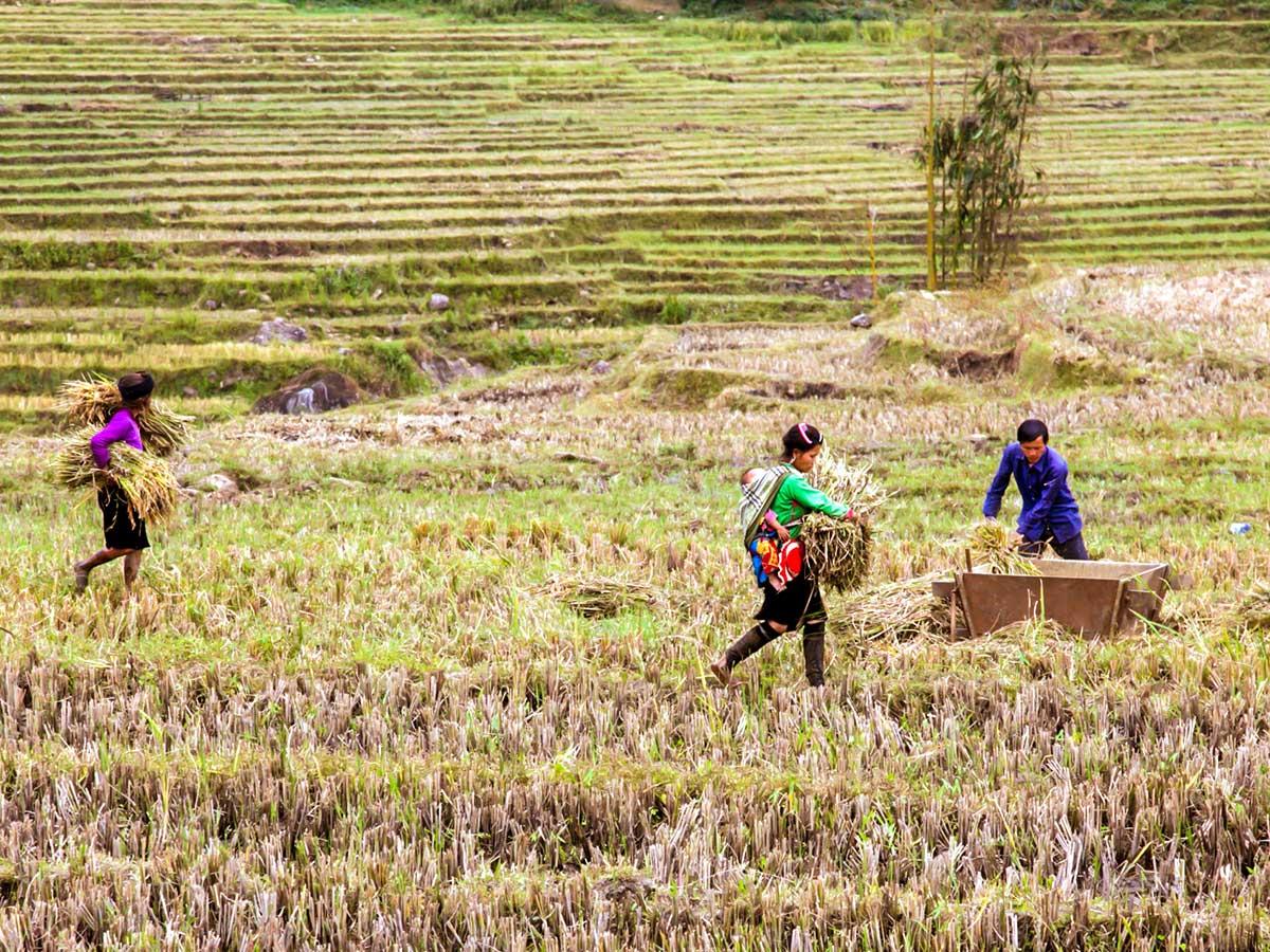 Farmlands seen along the trail on North Vietnam Mountain Trek