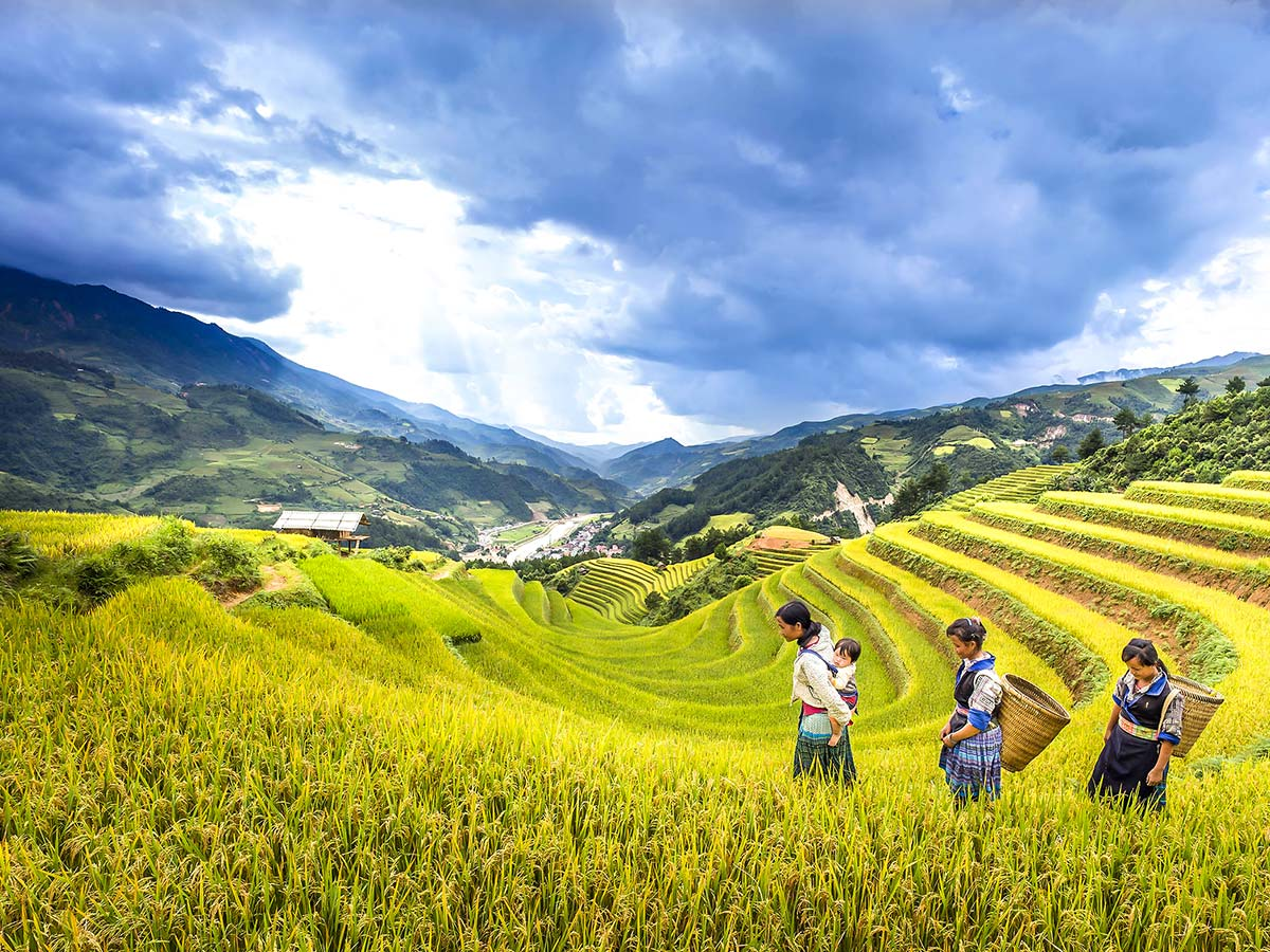 Beautiful terraces seen on day 8 of North Vietnam Mountain Trek