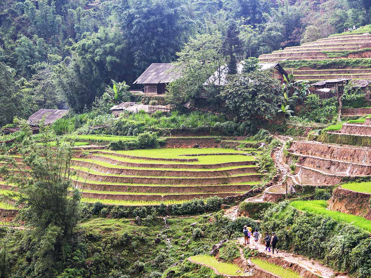 Cycling Up North To Laos in Vietnam visiting the rice farm terraces along the trail