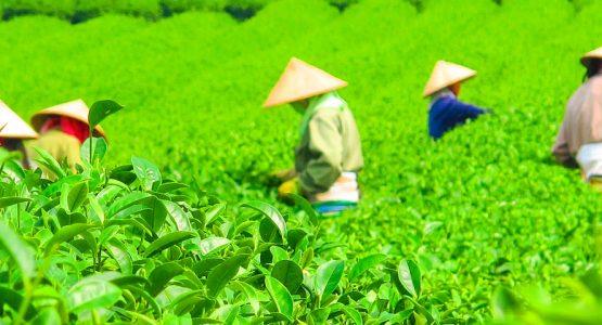 Vietnam Tropical Journey