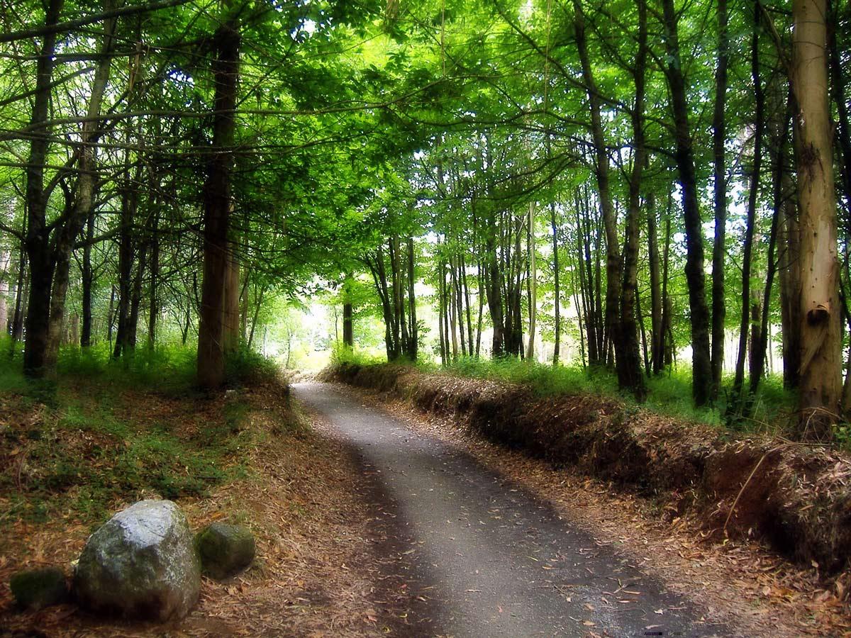 Path through the green forest on Camino de Santiago near Melide