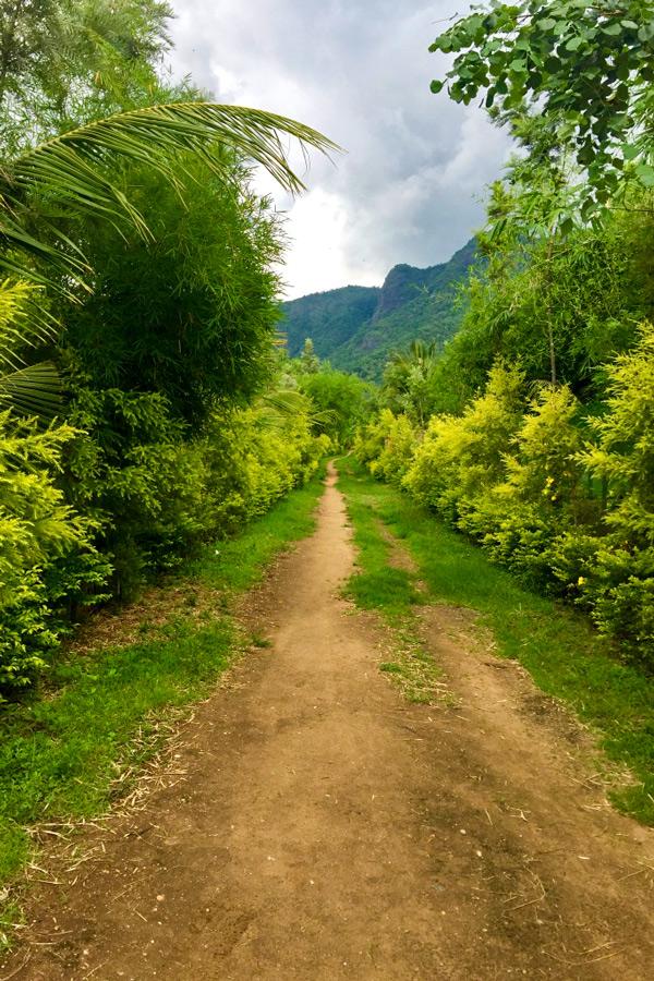 Wide biking path on Biking in Western Ghats Tour